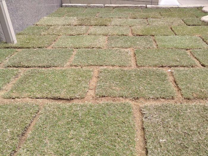 芝生植栽【豊中市】