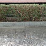 東淀川区でプリペットの剪定『Dマンション』