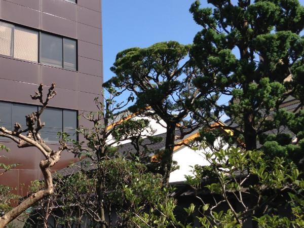 兵庫、伊丹で松やサルスベリなどの剪定(E様邸) 剪定後画像