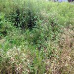 大阪、吹田で遊休農地の草刈り前画像