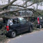 倒木によって引き起こされる危険な事故について