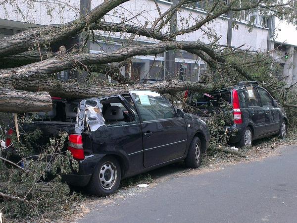 倒木の危険性