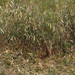 吹田市で空き地の草刈り