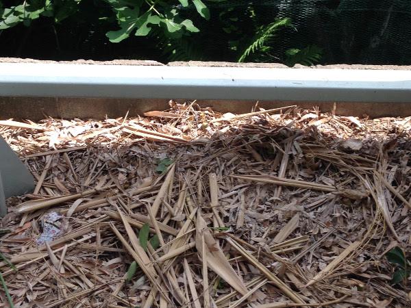 西淀川区で竹の伐採後のお庭