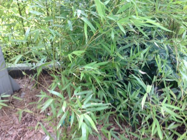 西淀川区で竹の伐採前のお庭