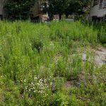 吹田市で空き地の草刈り『K様所有地』