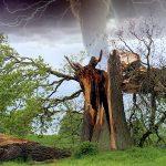 大切なお庭の木を守るため、台風や災害に備えて防災を考える