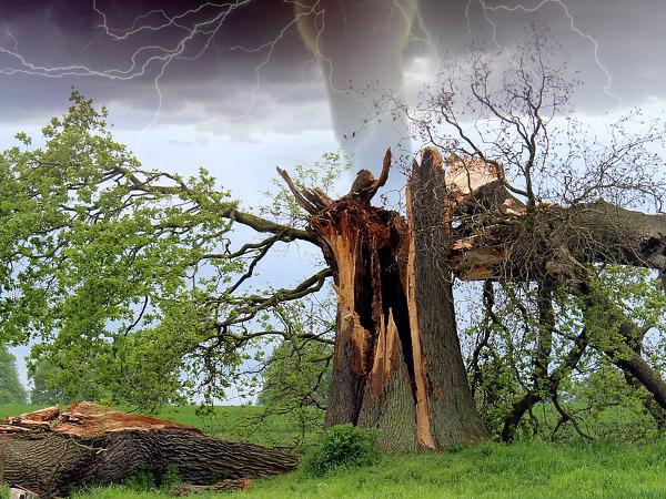 大切なお庭の木を守るため。台風や災害に備えて防災を考える