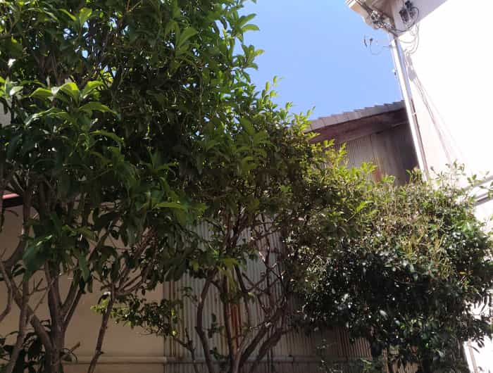 東淀川区で庭木の害虫駆除の薬剤散布後