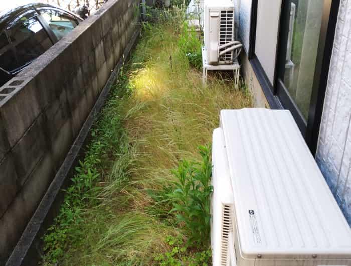 お庭の雑草【宝塚市】