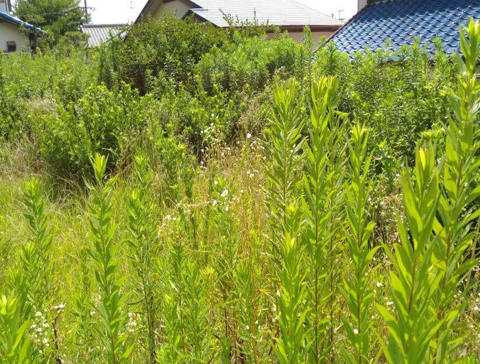 箕面で空き地の草刈り、除草剤散布(南側作業前)