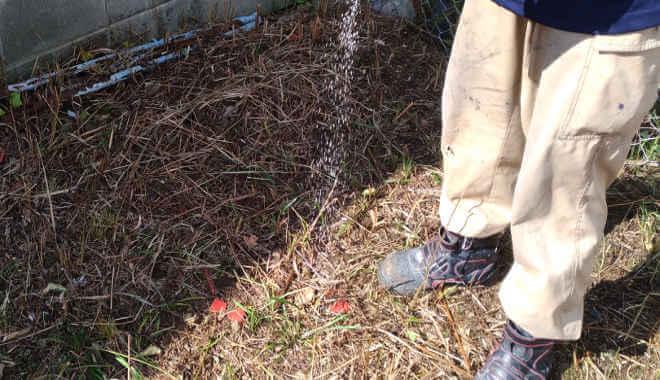 除草粒剤散布の様子