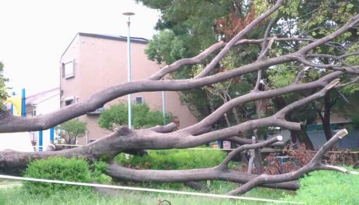 台風で倒木 大阪