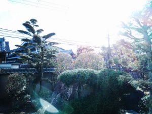 箕面市のお庭で、マキやイトヒバ・黒松などの剪定作業完了