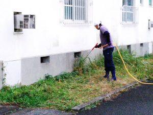 都島区で除草作業中(除草剤散布)
