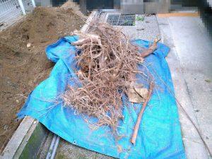 マンションの植木の抜根