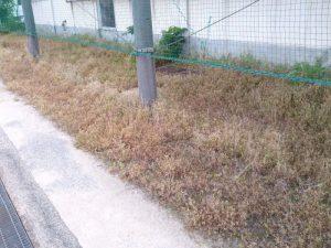 施設での除草剤(液体)散布後