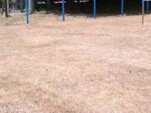 学校での除草剤散布後