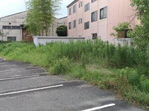 雑草がボウボウの駐車場