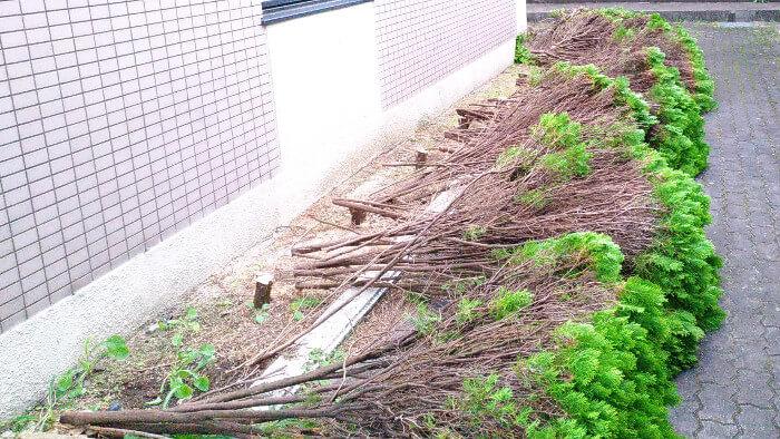 大阪のお庭サービス 伐採
