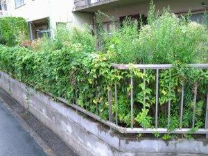 雑草が伸び放題の庭